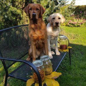 Herbstanfang in der Hundebäckerei